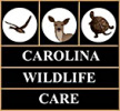carolina wildlife care